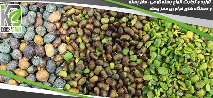 فروش تضمینی مغز بنه کردستان