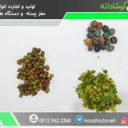 قیمت مغز بنه کوهی شیراز