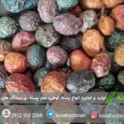 شرکت پخش پسته کوهی افغانستان