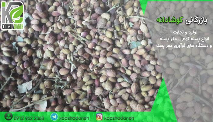 خرید عمده پسته جنگلی کرمان